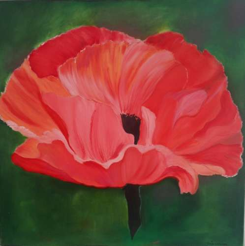 "Poppy, Oil, 24""x24"" (framed: Gallery size), $$110.0000"